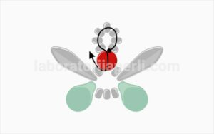 Privezak u obliku leptira korak 2